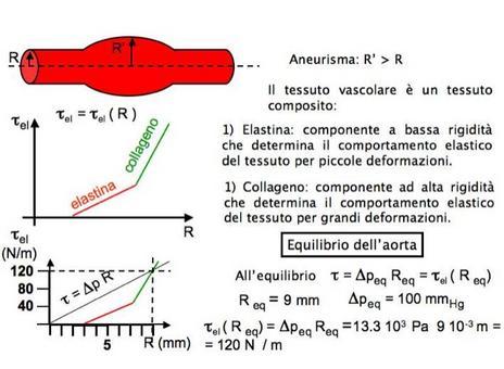 Equilibrio di un vaso sanguigno sotto l'azione della pressione interna dovuta al sangue e della pressione di Laplace dovuta alla superficie cilindrica del vaso