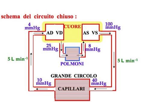 Schema del sistema circolatorio  (da INFN)