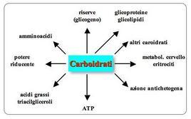 Funzione dei carboidrati