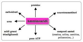 Funzione degli amminoacidi