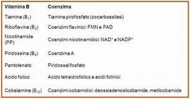 Tabella 1. I coenzimi derivati dalle vitamime B