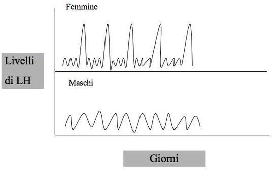LH nei maschi e nelle femmine