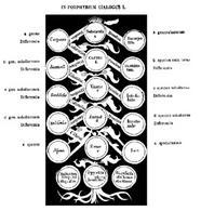 Arbor porphyrii nella traduzione di Boezio (VI secolo). Fonte: Wikipedia