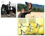 Cavallo murgese, Falconiere, Aaironi. Fonte wikipedia
