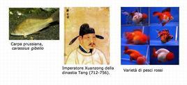 Fonti: Foto carpa, Imperatore Xuanzong della  dinastia Tang (712-756)., Foto pesci rossi.