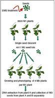 Dalmais et al., (2008) UTILLdb, a Pisum sativum in silico forward and  reverse genetics tool.  Genome Biology 2008, 9:R43
