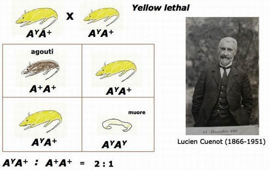 Autore disegni G. Saccone. Lucien Cuenot (1866-1951). Fonte:  wikipedia