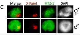 Img fonte:  plosgenetics.org.