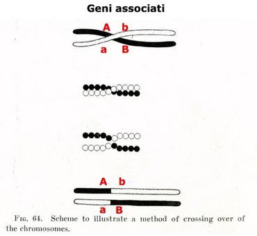 Geni associati. Fonte: Wikipedia