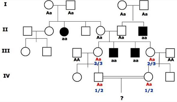 Assegniamo le probabilità di genotipi non certi.
