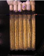 Neurospora crassa, cresciuta in tubi di vetro Dong et al., Plos One 2008
