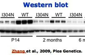 Fonte plosgenetics