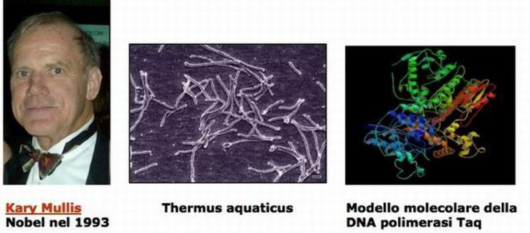 La reazione polimerasica a catena (PCR). Kary Mullis, fonte wikipedia; Thermus aquaticus fonte wikipedia; DNA polimerasi Taq fonte wikimedia