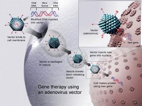 Terapia genica. Fonte wikipedia