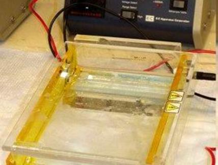 Apparato di elettroforesi. Fonte wikipedia