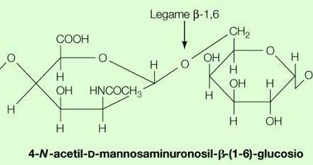 """Acidi teicuronici. Immagine modificata da """"Brock Biologia dei microrganismi"""" di Madigan et al.. Casa Editrice Ambrosiana."""