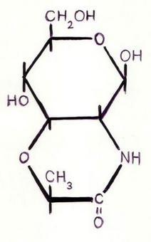 Lattame dell'Acido Muramico.