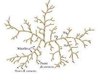 """Immagine modificata da """"Microbiologia farmaceutica"""" di Carlone et al."""