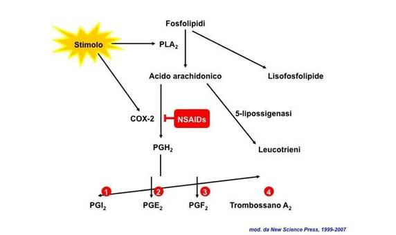 "Immagine modificata da ""Immunity"" di DeFranco et al., Casa Editrice Oxford University Press."