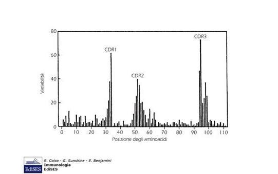 """Distribuzione della variabilità nelle regioni V. Immagine modificata da """"Immunologia"""" di Coico et al., Casa Editrice Edises."""