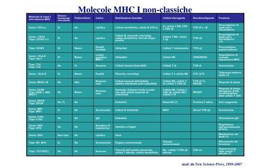 """Funzioni delle molecole MHC non-classiche. Immagine modificata da """"Immunity"""" di DeFranco et al., Casa Editrice Oxford University Press."""