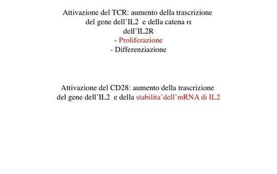 Struttura del promotore del gene dell'IL-2.