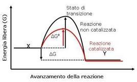 Fig. 2 Confronto tra il grafico della coordinata di reazione di una reazione non catalizzata e quello di una reazione catalizzata da un enzima