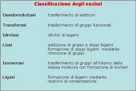 Fig. 4 Classificazione degli enzimi