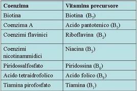 Fig. 2 I coenzimi e le vitamine precursori