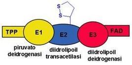 Fig. 3 Rappresentazione schematica del complesso della piruvato deidrogenasi