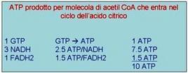 Fig. 7 Molecole di ATP prodotte dall'ossidazione di una molecola di acetil-CoA