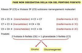 Fig. 3 Schema delle reazioni non ossidative della via del pentoso fosfato
