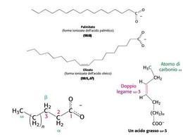 Fig. 1 Acidi grassi a diversa lunghezza della catena carboniosa e del numero di insaturazioni.