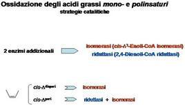 Fig. 14 Attività catalitiche addizionali richieste per la degradazione di acidi grassi insaturi