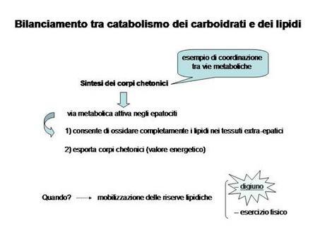 Fig. 18 Bilanciamento tra metabolismo glucidico e lipidico nel digiuno e nel corso dell'attività fisica