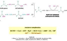 Fig. 9 Formazione degli acil CoA catalizzata dalla Acil CoA sintetasi
