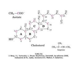 Fig. 1 Struttura molecolare del colesterolo
