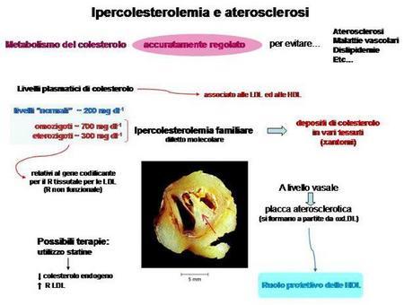 Fig. 15 Relazione tra metabolismo del colesterolo e ipercolesterolemia