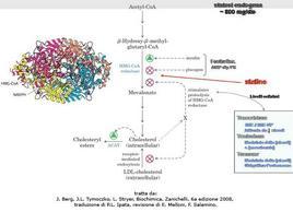 Fig. 8 Regolazione della sintesi del colesterolo: bilancio tra produzione endogena e assunzione