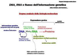 Fig. 14 Dogma centrale della biologia molecolare e flusso dell'informazione genetica