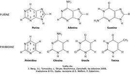Fig. 3 Basi puriniche e pirimidiniche presenti negli acidi nucleici