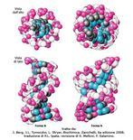 Fig. 7 Modelli spaziali di DNA B e DNA A