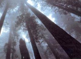 Effetto Tyndall in un bosco