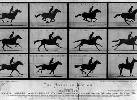 Animazione della corsa del cavallo in movimento (GIF Animata – Fonte: Wikipedia)