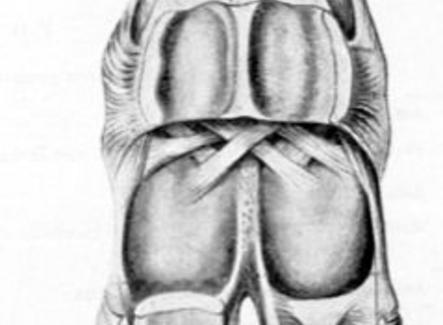 Veduta posteriore