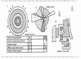 Modelli strutturali dello spazio urbano. Fonte: Formica, p. 441