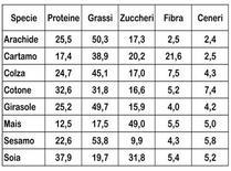 Composizione media dei principali semi (g%).