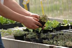 Impariamo  a coltivare.