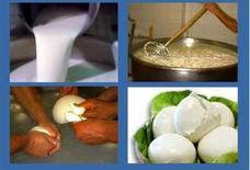 Fig.2e – Alcune fasi suscettibili di contaminazione durante la produzione di mozzarella