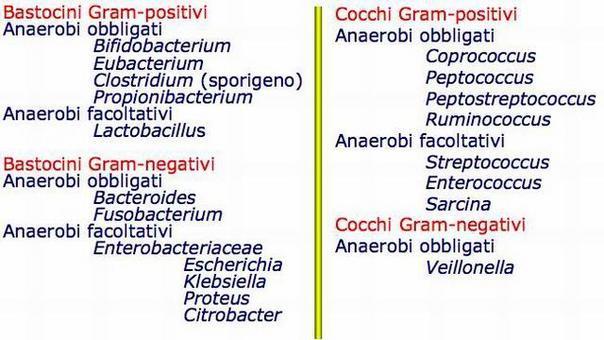 Principali gruppi microbici dell'intestino